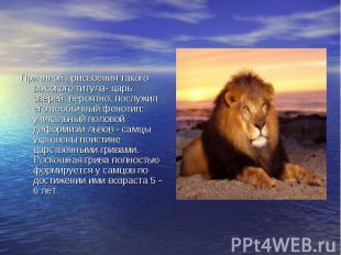 Причиной присвоения такого высокого титула- царь зверей, вероятно, послужил его
