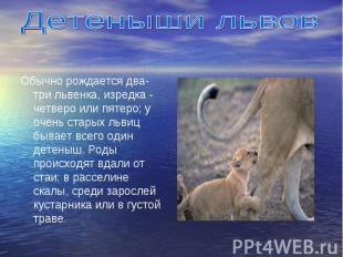 Обычно рождается два- три львенка, изредка - четверо или пятеро; у очень старых