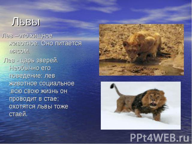 Львы Лев –это хищное животное. Оно питается мясом. Лев - царь зверей. Необычно его поведение: лев животное социальное,всю свою жизнь он проводит в стае; охотятся львы тоже стаей. Лев - царь зверей. Необычно его поведение: лев животное социальное,всю…