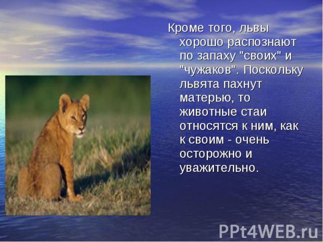 Кроме того, львы хорошо распознают по запаху