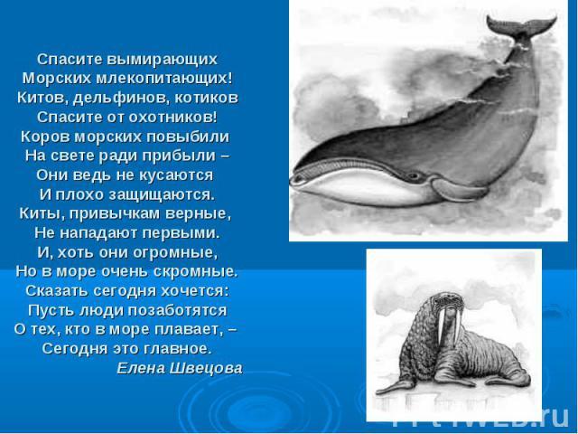 Спасите вымирающих Морских млекопитающих! Китов, дельфинов, котиков Спасите от охотников! Коров морских повыбили На свете ради прибыли – Они ведь не кусаются И плохо защищаются. Киты, привычкам верные, Не нападают первыми. И, хоть они огромные, Но в…