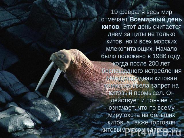 19 февраля весь мир отмечает Всемирный день китов. Этот день считается днем защиты не только китов, но и всех морских млекопитающих. Начало было положено в 1986 году, когда после 200 лет беспощадного истребления Международная китовая комиссия ввела …