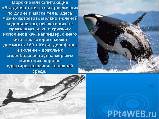 Морские млекопитающие объединяют животных различных по длине и массе тела. Здесь можно встретить мелких тюленей и дельфинов, вес которых не превышает 50 кг, и крупных исполинов как, например, синего кита, вес которого может достигать 160 т. Киты, де…
