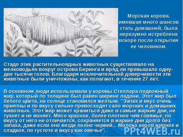 Морская корова, имевшая много шансов стать домашней, была неразумно истреблена вскоре после открытия ее человеком. Стадо этих растительноядных животных существовало на мелководьях вокруг острова Беринга и вряд ли превышало одну- две тысячи голов. Бл…