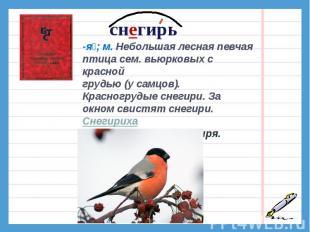 снегирь-я; м. Небольшая лесная певчая птица сем. вьюрковых с красной грудью (у с