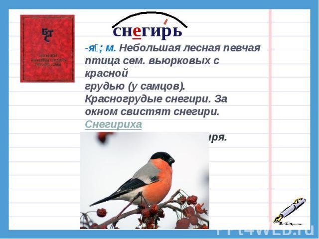снегирь-я; м. Небольшая лесная певчая птица сем. вьюрковых с красной грудью (у самцов). Красногрудые снегири. За окном свистят снегири.Снегириха-и; ж. Разг. Самка снегиря.Снегириный