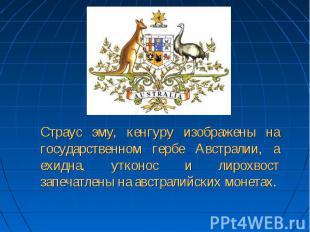 Страус эму, кенгуру изображены на государственном гербе Австралии, а ехидна, утк