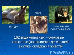 162 вида животных – сумчатые животные (донашивают детенышей в сумке, складка на