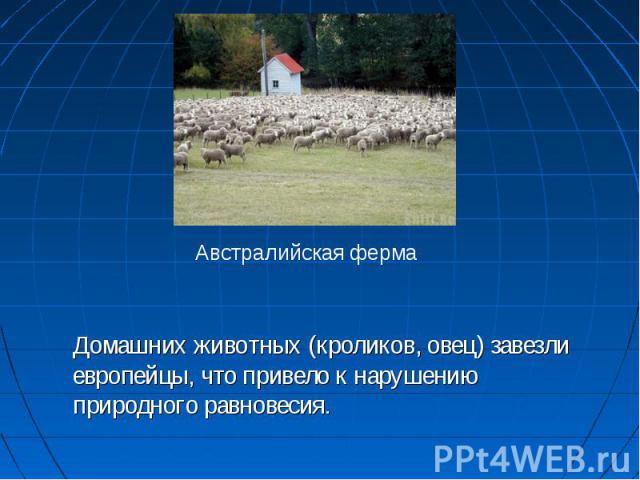Домашних животных (кроликов, овец) завезли европейцы, что привело к нарушению природного равновесия. Австралийская ферма