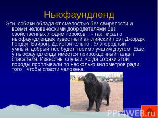 Ньюфаундленд Эти собаки обладают смелостью без свирепости и всеми человеческими