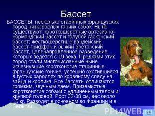 Бассет БАССЕТЫ, несколько старинных французских пород низкорослых гончих собак.