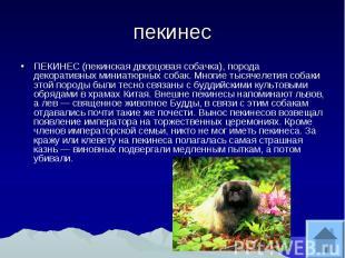 пекинес ПЕКИНЕС (пекинская дворцовая собачка), порода декоративных миниатюрных с