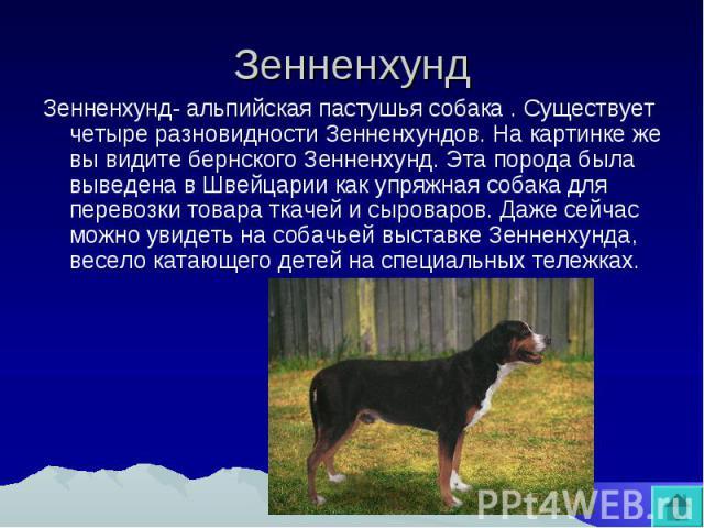 Зенненхунд Зенненхунд- альпийская пастушья собака. Существует четыре разновидности Зенненхундов. На картинке же вы видите бернского Зенненхунд. Эта порода была выведена в Швейцарии как упряжная собака для перевозки товара ткачей и сыроваров. Даже се…