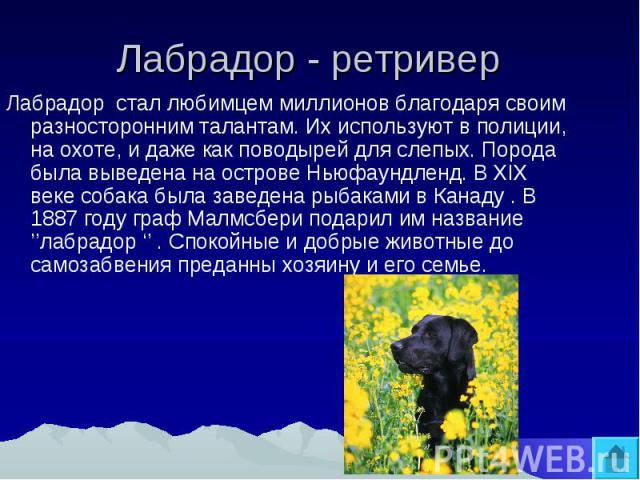 Лабрадор - ретривер Лабрадор стал любимцем миллионов благодаря своим разносторонним талантам. Их используют в полиции, на охоте, и даже как поводырей для слепых. Порода была выведена на острове Ньюфаундленд. В XIX веке собака была заведена рыбаками …