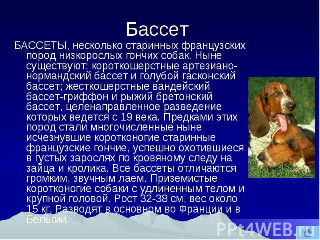 Бассет БАССЕТЫ, несколько старинных французских пород низкорослых гончих собак. Ныне существуют: короткошерстные артезиано- нормандский бассет и голубой гасконский бассет; жесткошерстные вандейский бассет-гриффон и рыжий бретонский бассет, целенапра…