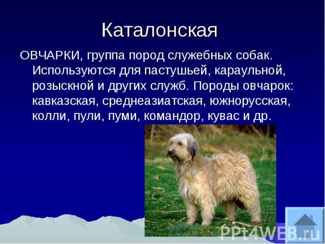 Каталонская ОВЧАРКИ, группа пород служебных собак. Используются для пастушьей, караульной, розыскной и других служб. Породы овчарок: кавказская, среднеазиатская, южнорусская, колли, пули, пуми, командор, кувас и др.