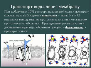 Транспорт воды через мембрану При добавлении 10% раствора поваренной соли к преп