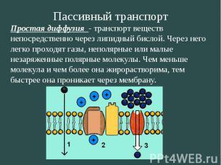 Пассивный транспорт Простая диффузия - транспорт веществ непосредственно через л