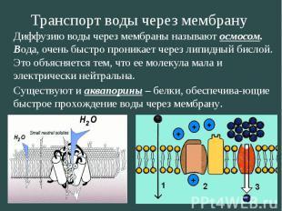 Транспорт воды через мембрану Диффузию воды через мембраны называют осмосом. Вод