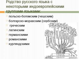 Родство русского языка с некоторыми индоевропейскими группами языками : польско