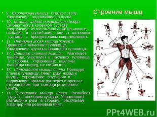 9. Икроножная мышца. Сгибает стопу. Упражнение: поднимание на носки.9. Икроножна