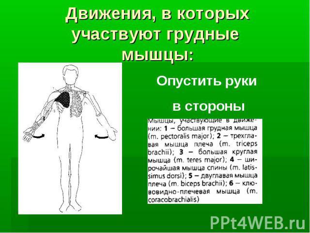 Движения, в которых участвуют грудные мышцы: Опустить руки в стороны