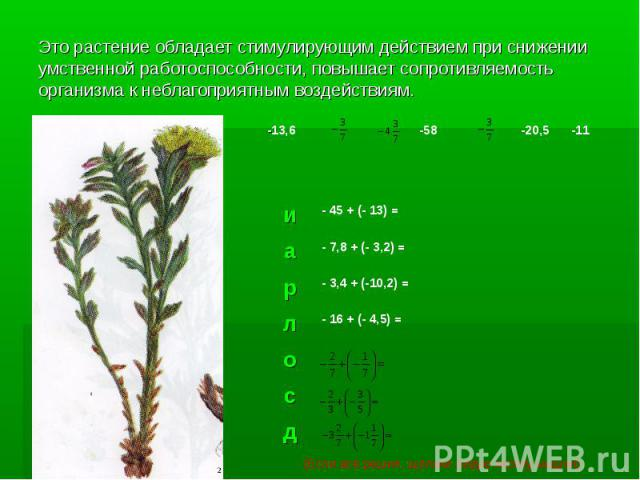 Это растение обладает стимулирующим действием при снижении умственной работоспособности, повышает сопротивляемость организма к неблагоприятным воздействиям.