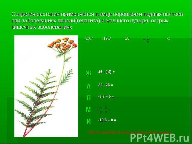 Соцветия растения применяются в виде порошков и водных настоев при заболеваниях печени(гепатита) и желчного пузыря, острых кишечных заболеваниях.