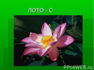 ЛОТО - С