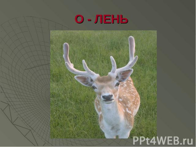 О - ЛЕНЬ