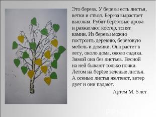 Это береза. У березы есть листья, ветки и ствол. Береза вырастает высокая. Рубят