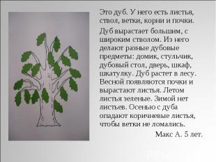 Это дуб. У него есть листья, ствол, ветки, корни и почки. Дуб вырастает большим,