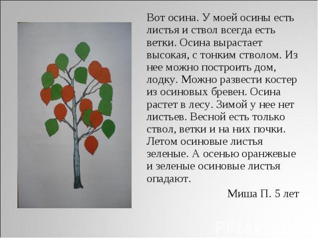 Вот осина. У моей осины есть листья и ствол всегда есть ветки. Осина вырастает высокая, с тонким стволом. Из нее можно построить дом, лодку. Можно развести костер из осиновых бревен. Осина растет в лесу. Зимой у нее нет листьев. Весной есть только с…