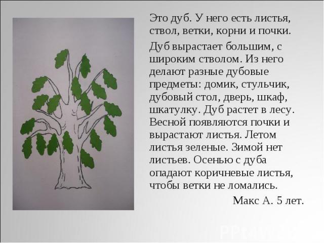 Это дуб. У него есть листья, ствол, ветки, корни и почки. Дуб вырастает большим, с широким стволом. Из него делают разные дубовые предметы : домик, стульчик, дубовый стол, дверь, шкаф, шкатулку. Дуб растет в лесу. Весной появляются почки и вырастают…