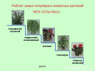 Рейтинг самых популярных комнатных растений МОУ «СОШ 11» Хлорофитум хохлатый Неф