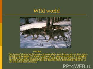 Wild world Animals The Reserve's fauna has 83 species of mammalsthe most famous