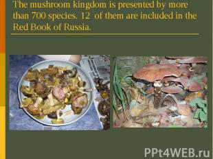 The mushroom kingdom is presented by more than 700 species. 12 of them are inclu