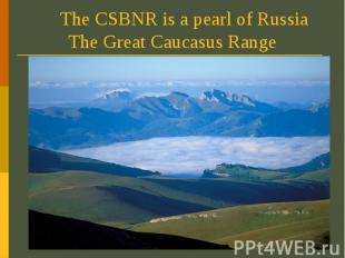The CSBNR is a pearl of Russia The Great Caucasus Range