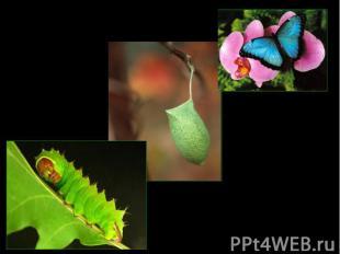 бабочкакуколкагусеница