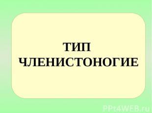ТИП ЧЛЕНИСТОНОГИЕ