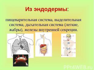 пищеварительная система, выделительная система, дыхательная система (легкие, жаб