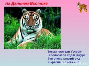 На Дальнем Востоке Тигры –жители Уссури- В полосатой ходят шкуре. Это очень редк