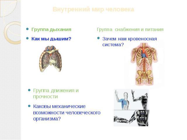 Группа дыхания Как мы дышим? Группа снабжения и питания Зачем нам кровеносная система? Группа движения и прочности Каковы механические возможности человеческого организма?