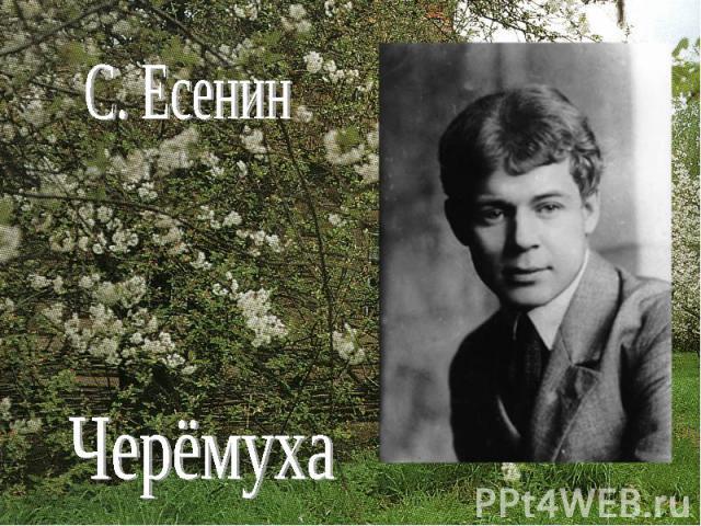С. ЕсенинЧерёмуха
