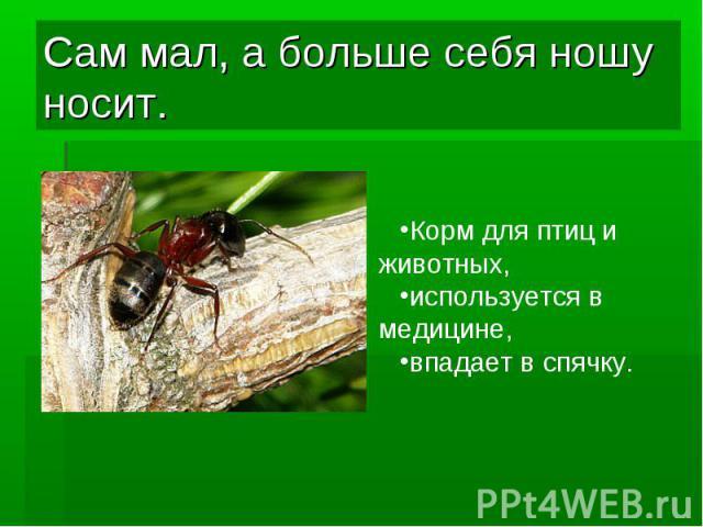 Сам мал, а больше себя ношу носит.Корм для птиц и животных, используется в медицине, впадает в спячку.
