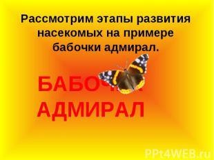 Рассмотрим этапы развития насекомых на примере бабочки адмирал.БАБОЧКА АДМИРАЛ
