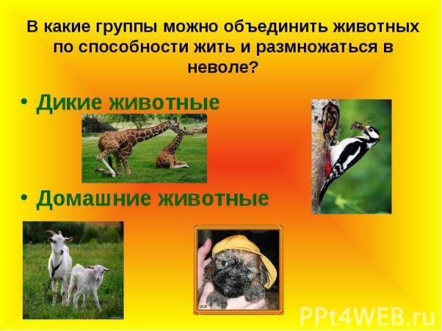 В какие группы можно объединить животных по способности жить и размножаться в неволе?Дикие животныеДомашние животные