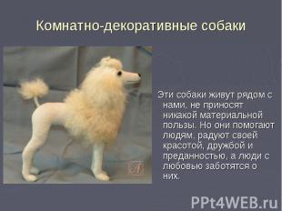 Эти собаки живут рядом с нами, не приносят никакой материальной пользы. Но они п