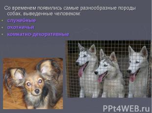 Со временем появились самые разнообразные породы собак, выведенные человеком: Со