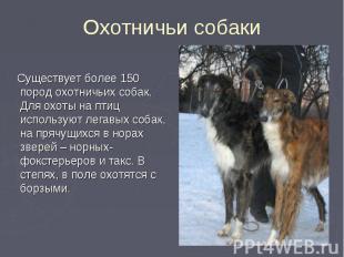 Существует более 150 пород охотничьих собак. Для охоты на птиц используют легавы